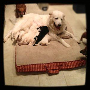 Newborn Puppies by Jennie Adams